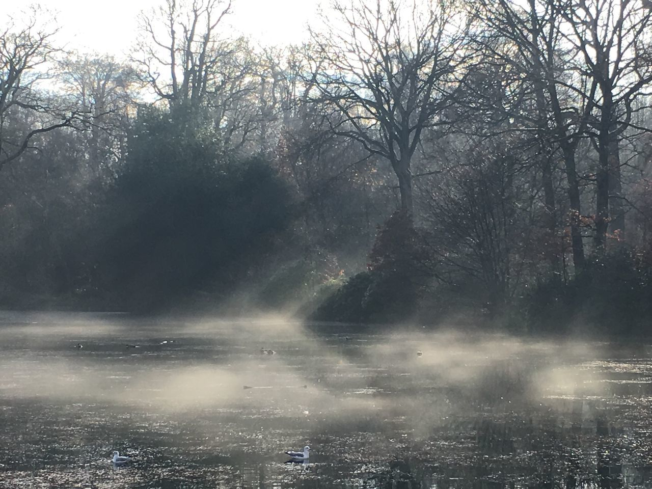Beauty In Nature Day Fog Hampstead Heath MIS Nature No People Outdoors Scenics Sky Tree Water
