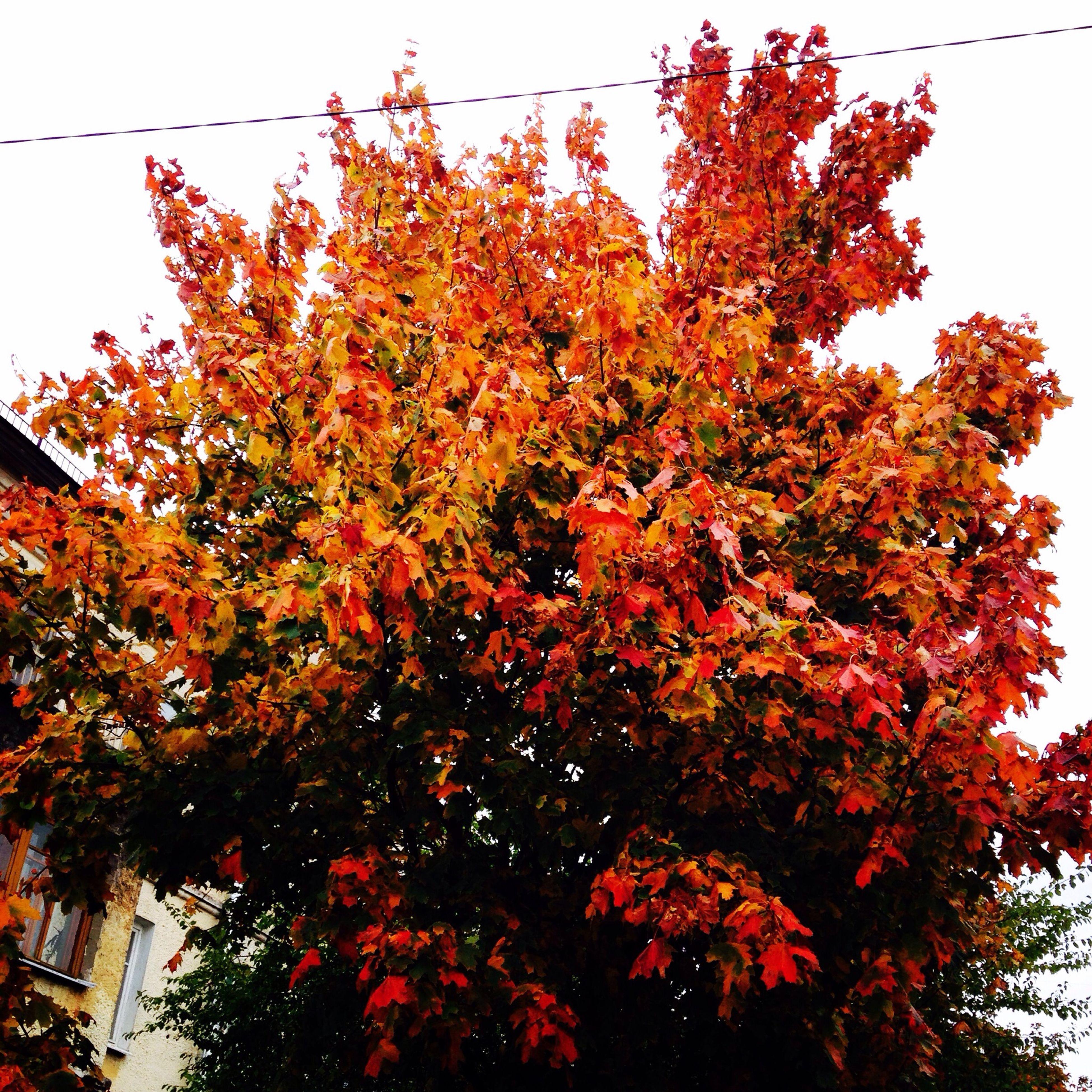 Осень??