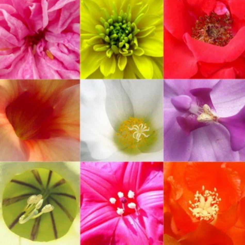 Flowerlovers Floral_lover Flowers Nature Flower Flora Art Colors Colorful Floral Naturelovers WeLoveNature