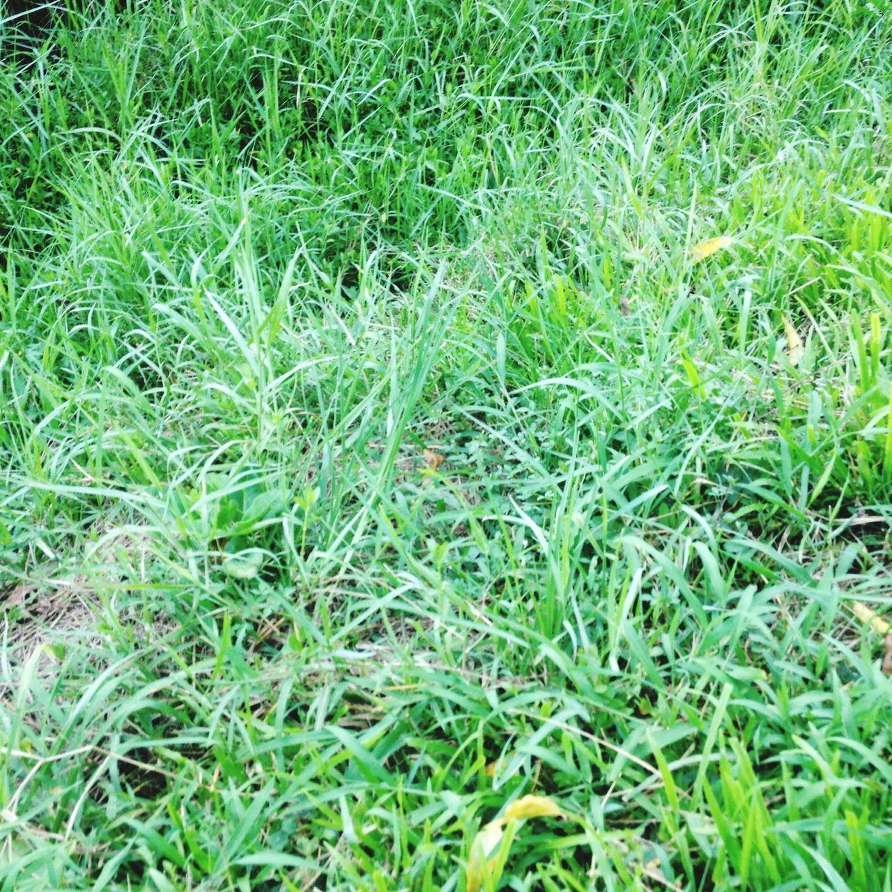 Rumput yg bergoyang nan asri