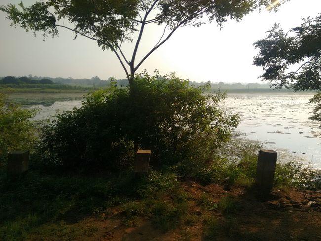 Journey Journeyphotography Pond Sunset_collection Tree In Sunset Water Water_collection Water Lilles