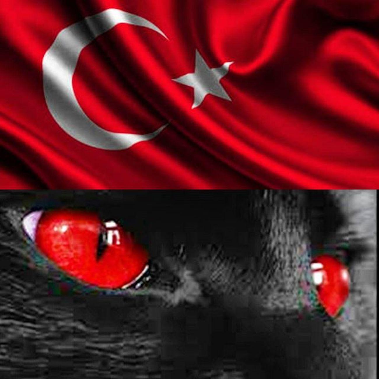 HATE TERROR.... Istanbul Türkiye Turkey Terror Peace Peacefortheworld Peaceforall Noterrorism Ankara Proud Turkisharmy Army Force Oneland Instamoment Instam Instagram Instagood Instadaily Instamood Insta Instagramers Instagramhub Instagram_turkey