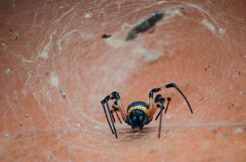 #bioma #insects Animal Themes Animals In The Wild Aracnide Day Nature No People Outdoors Spider Adapted To The City
