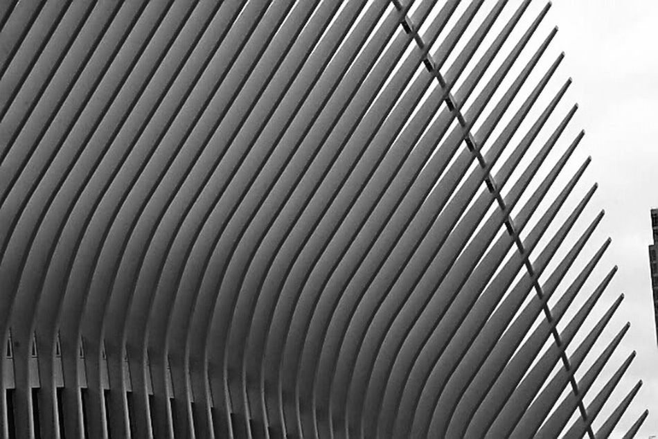 Architecture Built Structure Building Exterior Modern Low Angle View Repetition No People Pattern Oculus Lines Shadow Shadows NYC Design Architectural