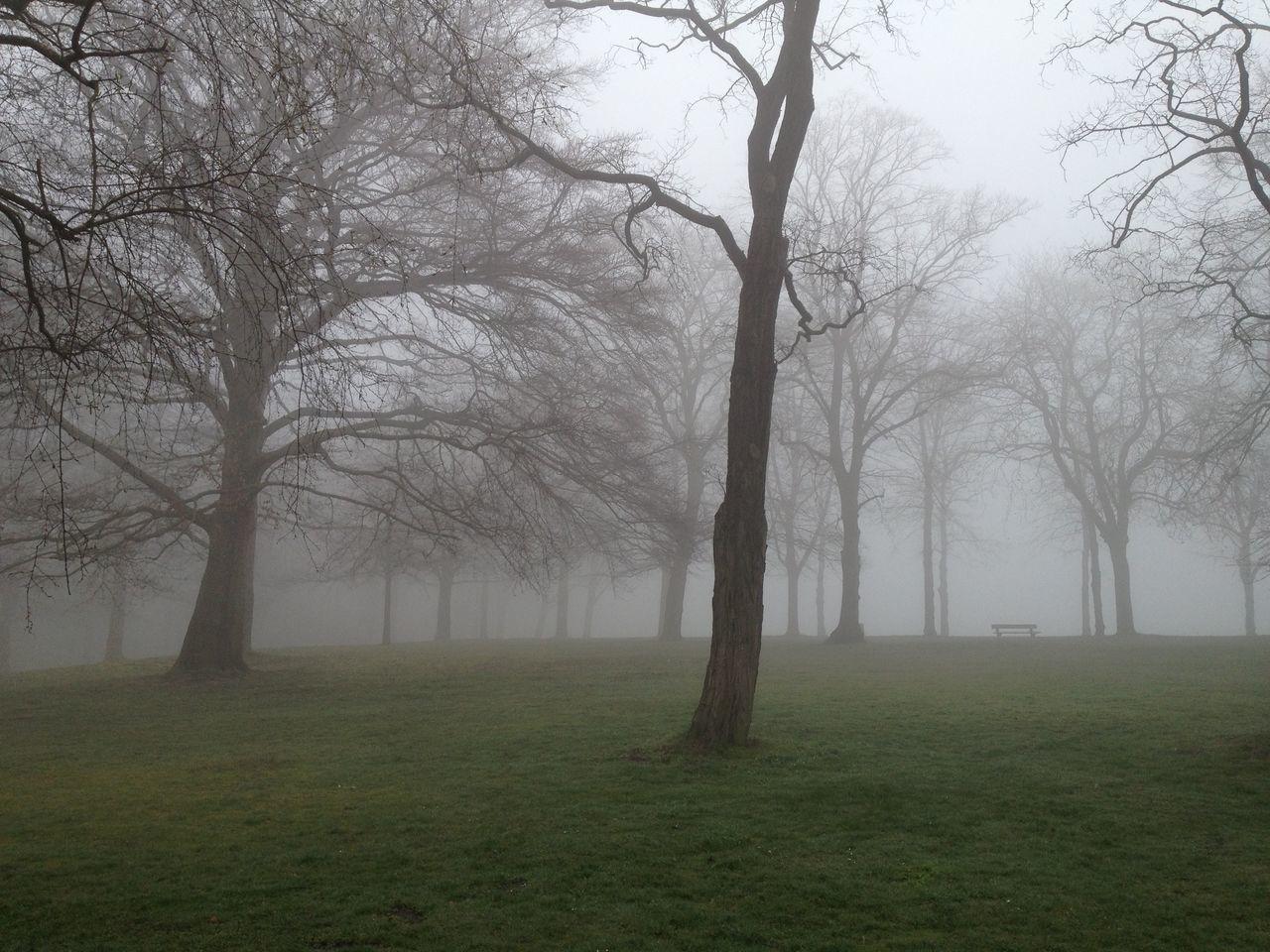 Vorsicht im Nebel Fog Foggy Forest Grass Hazy  Landscape Nature Nebel Scenics Tranquility Tree Wald