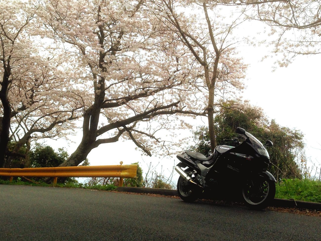 Hugging A Tree サクラ Cherry Blossoms Getting In Touch Moto Life Tears Springtime Wonderful Day Enjoying Life