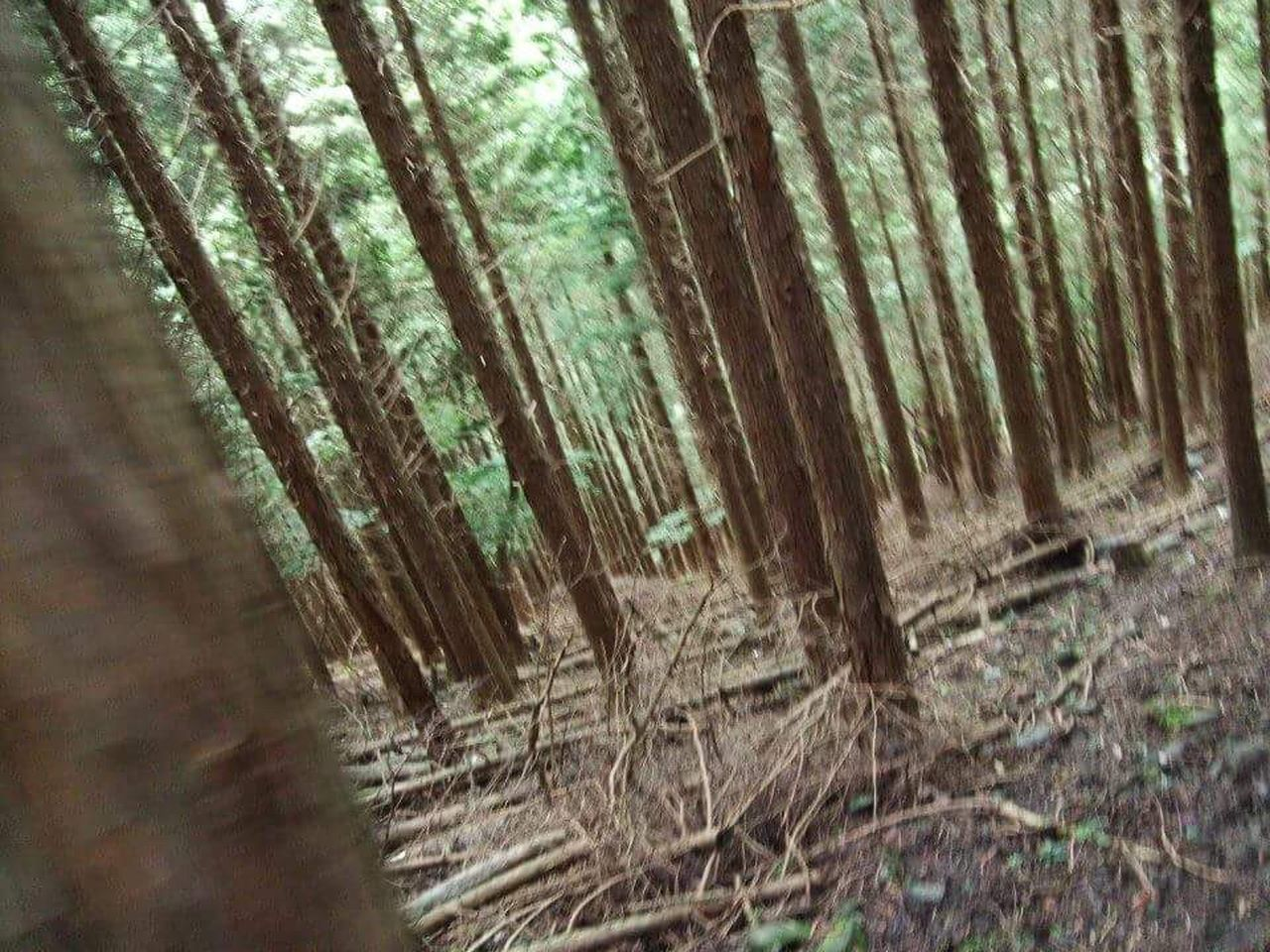 nature, forest, no people, day, tree trunk, outdoors, tree, close-up