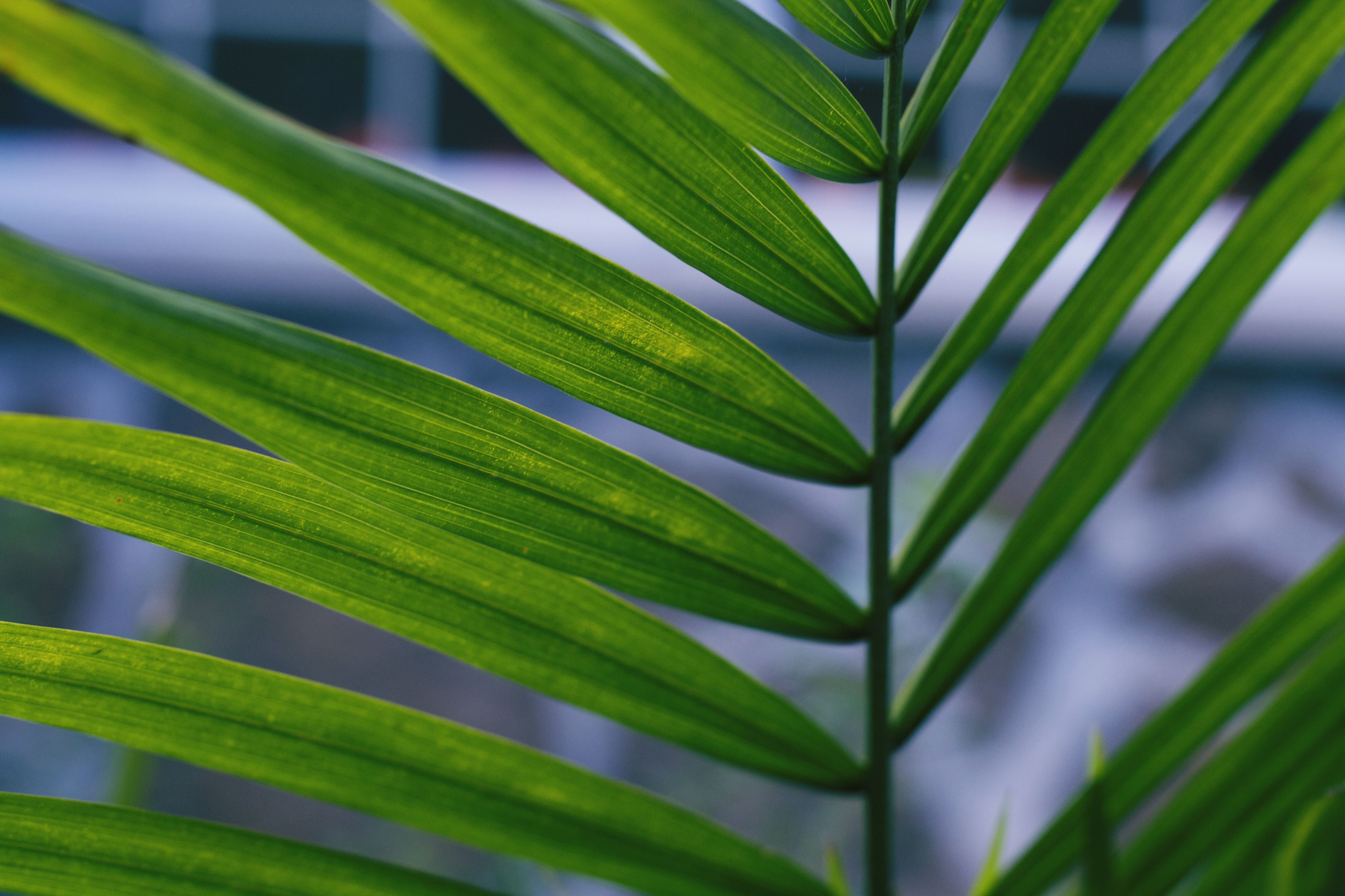 leaf, green color, growth, plant, close-up, focus on foreground, nature, beauty in nature, selective focus, green, leaf vein, freshness, stem, outdoors, day, no people, natural pattern, leaves, fragility, growing