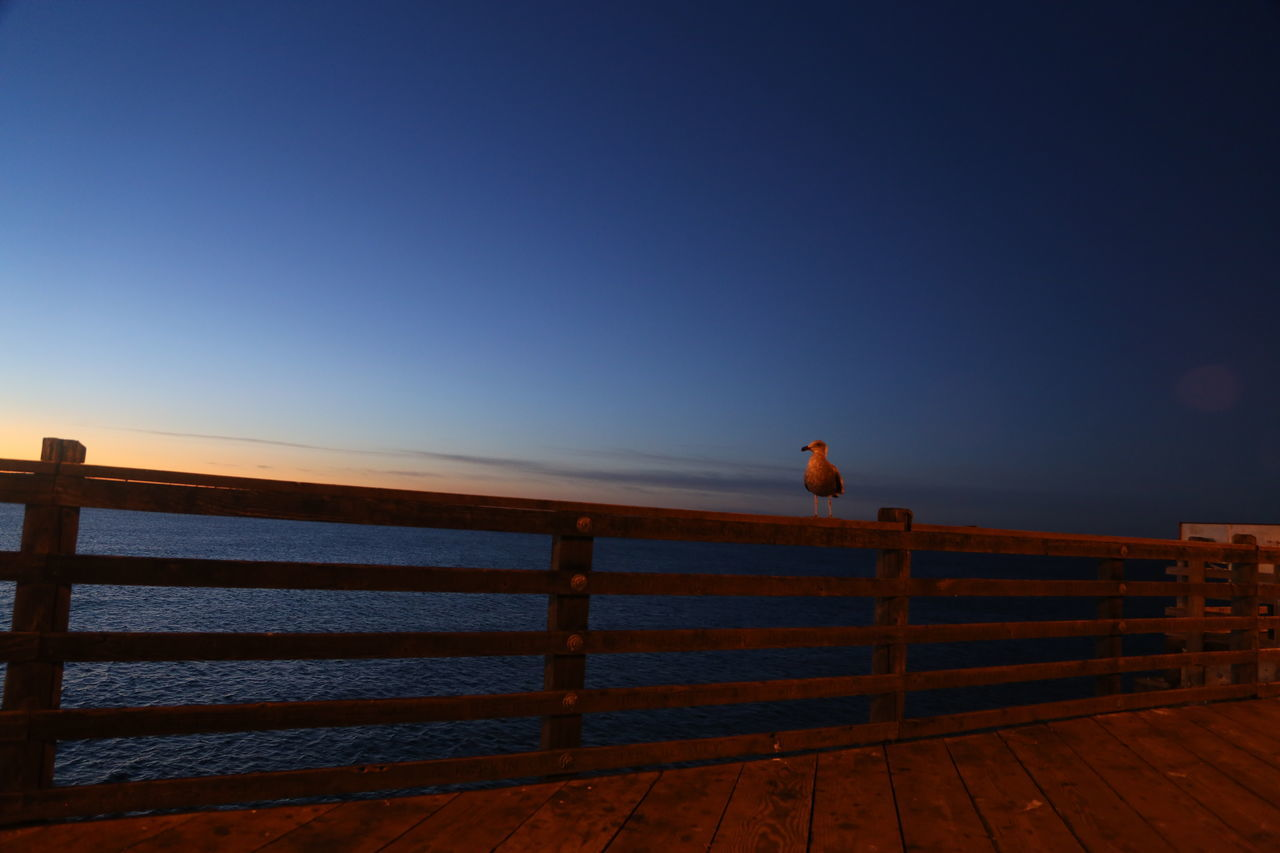 Beach Clear Sky Early Morning Nature No People Ocean One Animal Outdoors Pier Seagull Silhouette Sun Rise Water Wooden Railing
