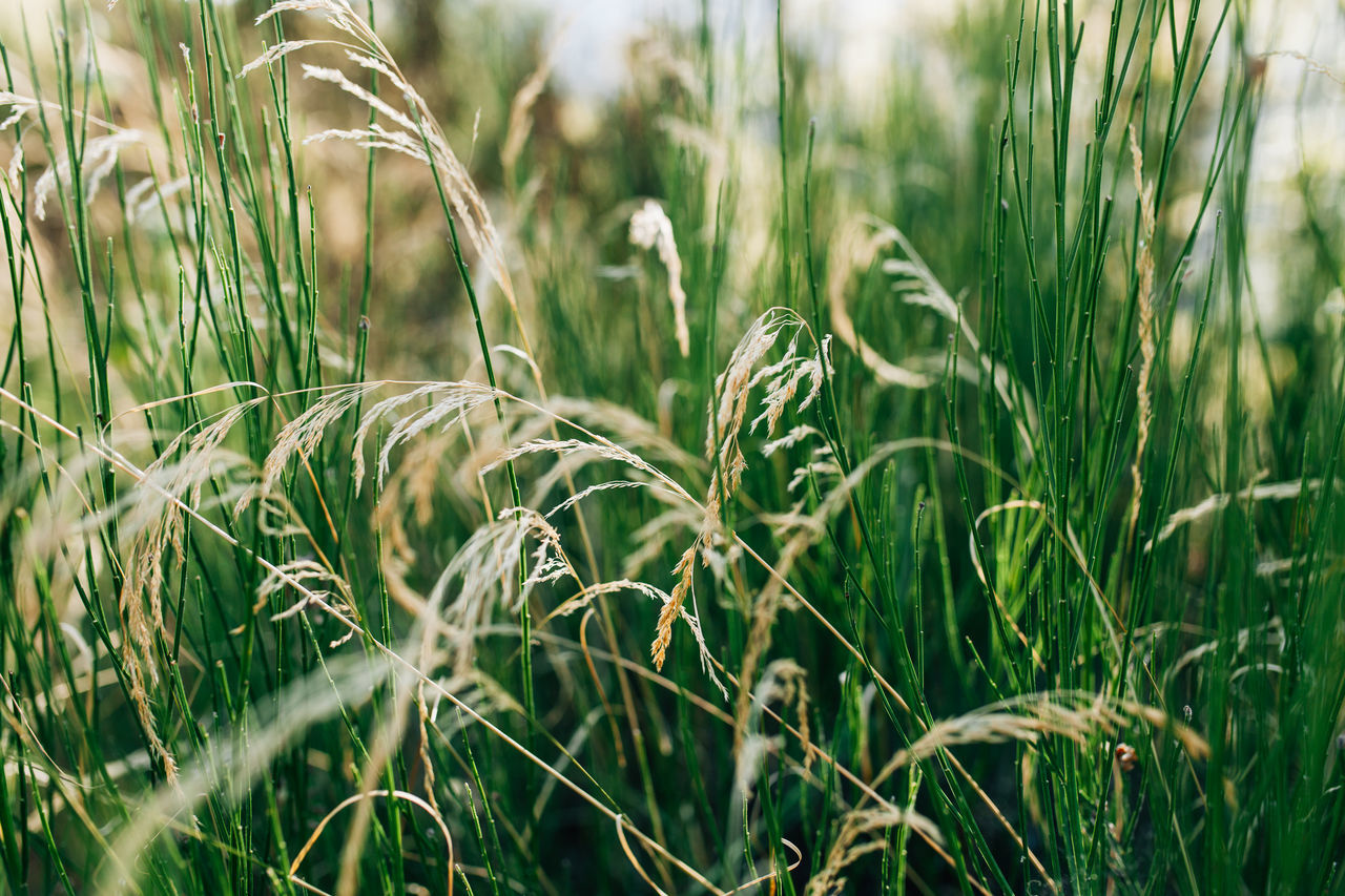 Beauty In Nature Close-up Day Extremadura Field Grass Green Green Color Growth Leaves Leaves🌿 Nature Nature Nature Photography Nature_collection No People Outdoors Plant Rural Scene Tranquility