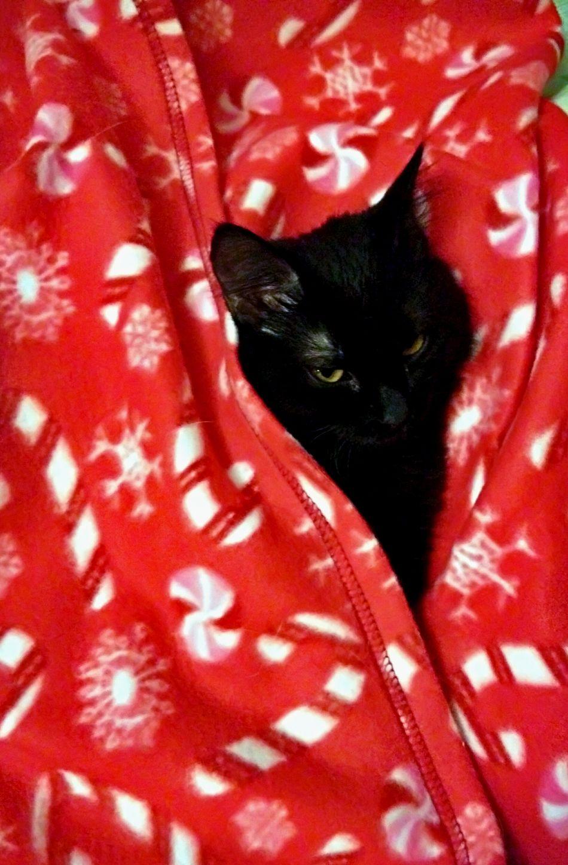 Cat Photography Cat♡ Cats 🐱 Cat One Animal Animal Pets I Love My Cat Domestic Cat Black Cat Photography One Cat Kitten 🐱 Black Cat😻my Sweety Cat😻 😻😻😻❤️ Beatiful Cat I LOVE PHOTOGRAPHY Animal_collection
