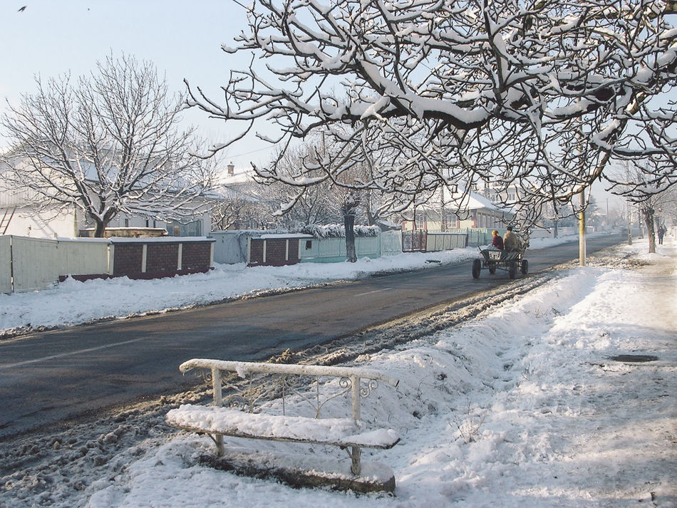 Architecture Bare Tree Branch Building Exterior Built Structure Cart Cold Temperature Covered The Drive Frozen Horses Morning Nature Road Season  Snow Street Sunny The Way Forward Transportation Tree Weather White Color Winter Winter