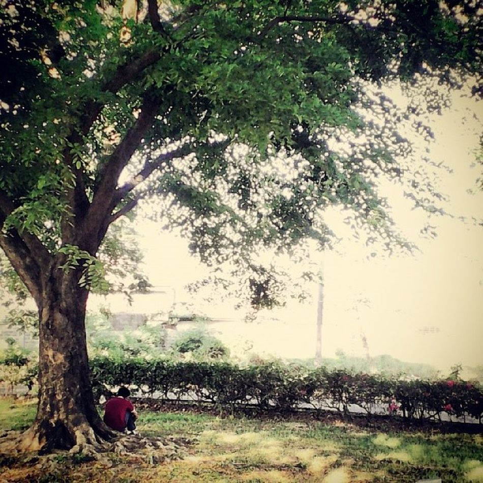 So while I was on my way home, I saw this strange man sitting under the tree. I think it's sweet and full of emotions, so I took a snapshot. ? ? ? ? ? ⛅ ? ♕ ❀ ♡ ♡ Mansittingunderthetree Sweetmorning Appreciation Wentforajogandthis fitnessbeauty howbeautiful nahh Goodmorning nature xx lovethis