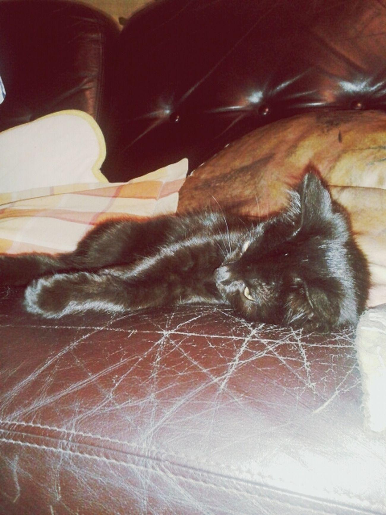 Meine Katze :).
