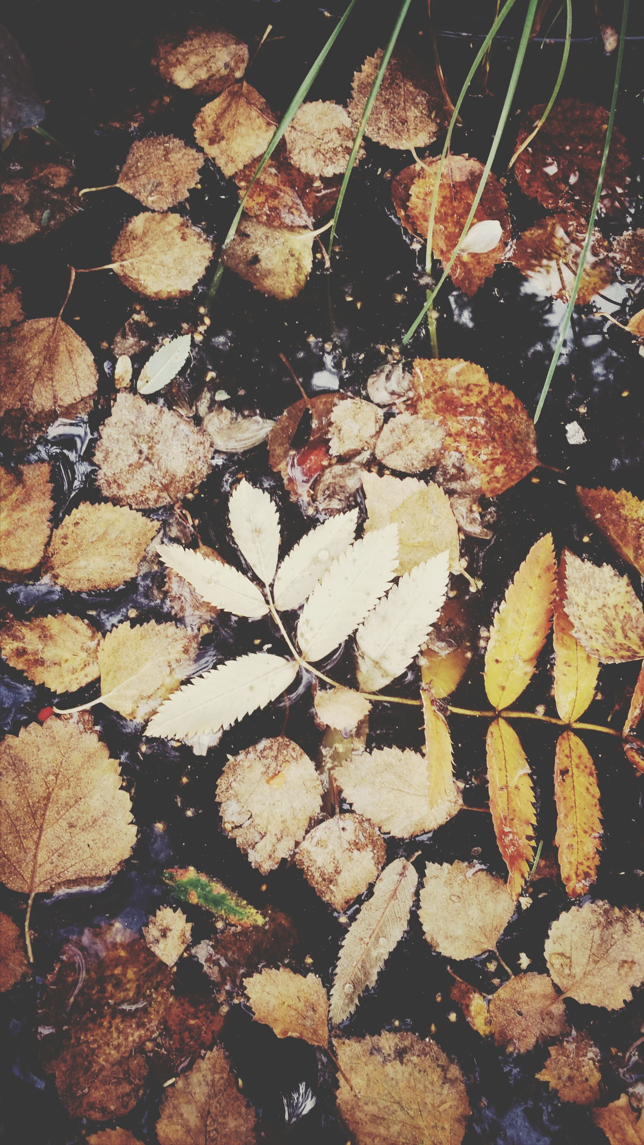 leaf, autumn, dry, nature, change, full frame, high angle view, backgrounds, fallen, leaves, outdoors, close-up, tranquility, growth, day, no people, season, abundance, natural pattern, textured