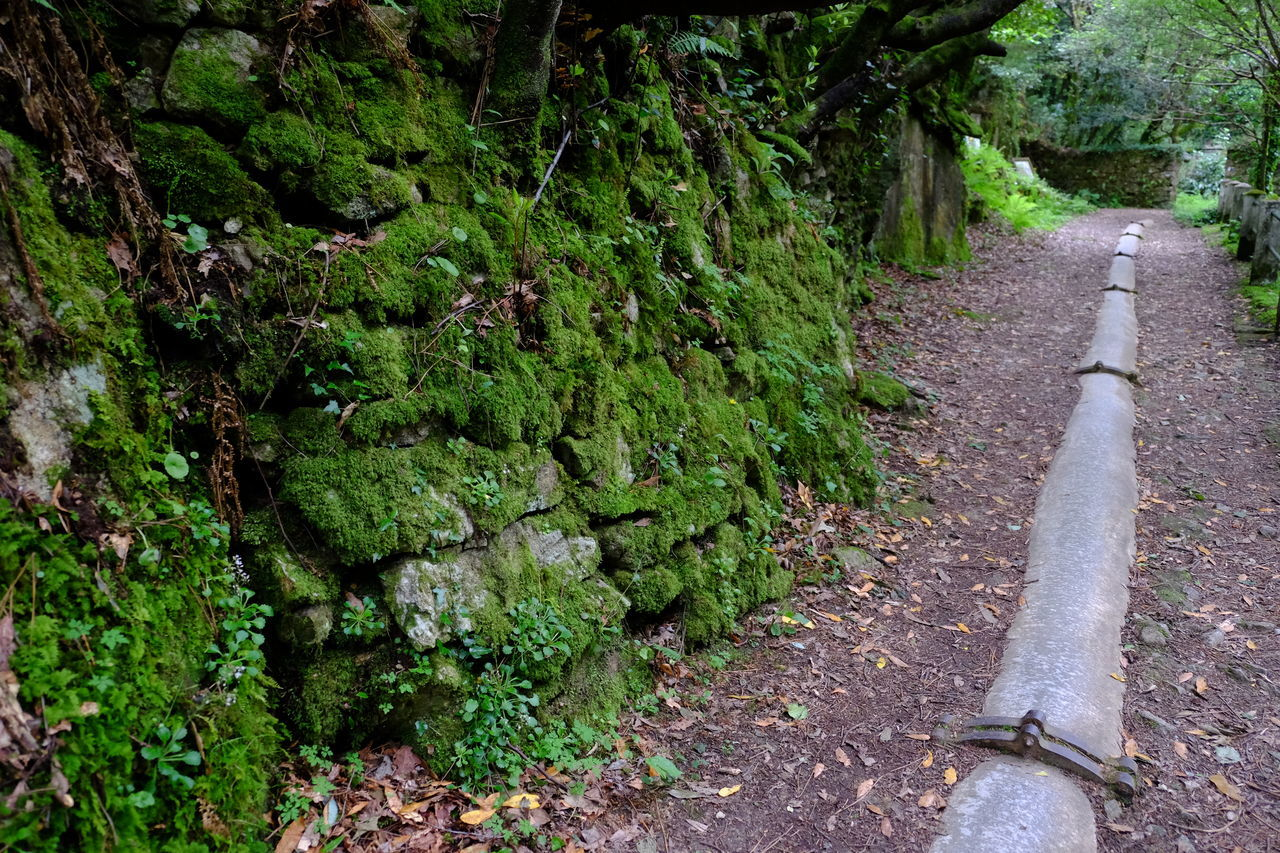 Beauty In Nature Day Forest Growth Growth Humidity Hydroelectric Power Moss Nature Neda,Galicia,Spain No People Outdoors Pathway Pipe Plant Rocks Tranquility Tree Walkway Water Pipe