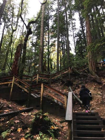 Outdoors WoodLand Tree Forest Nature Wood - Material Day Beauty In Nature Vancouver BC Canada Challenge Climbing