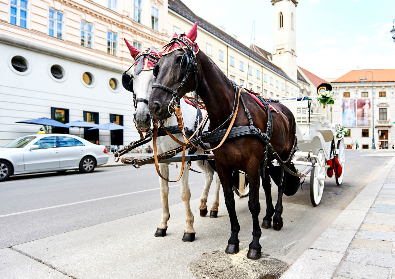 Horse-drawn carriage (Fiacre) waiting for a tourists in the old city in Vienna, Austria Animal Austria Austrian Brown City Horse-drawn Carriage Horse-driven Horses Imperial Landmark Mammals Old Town Retro Styled Roadside Sights Sightseeing Street Tourism Tourist Attraction  Travel Urban Vienna Vintage White Wien