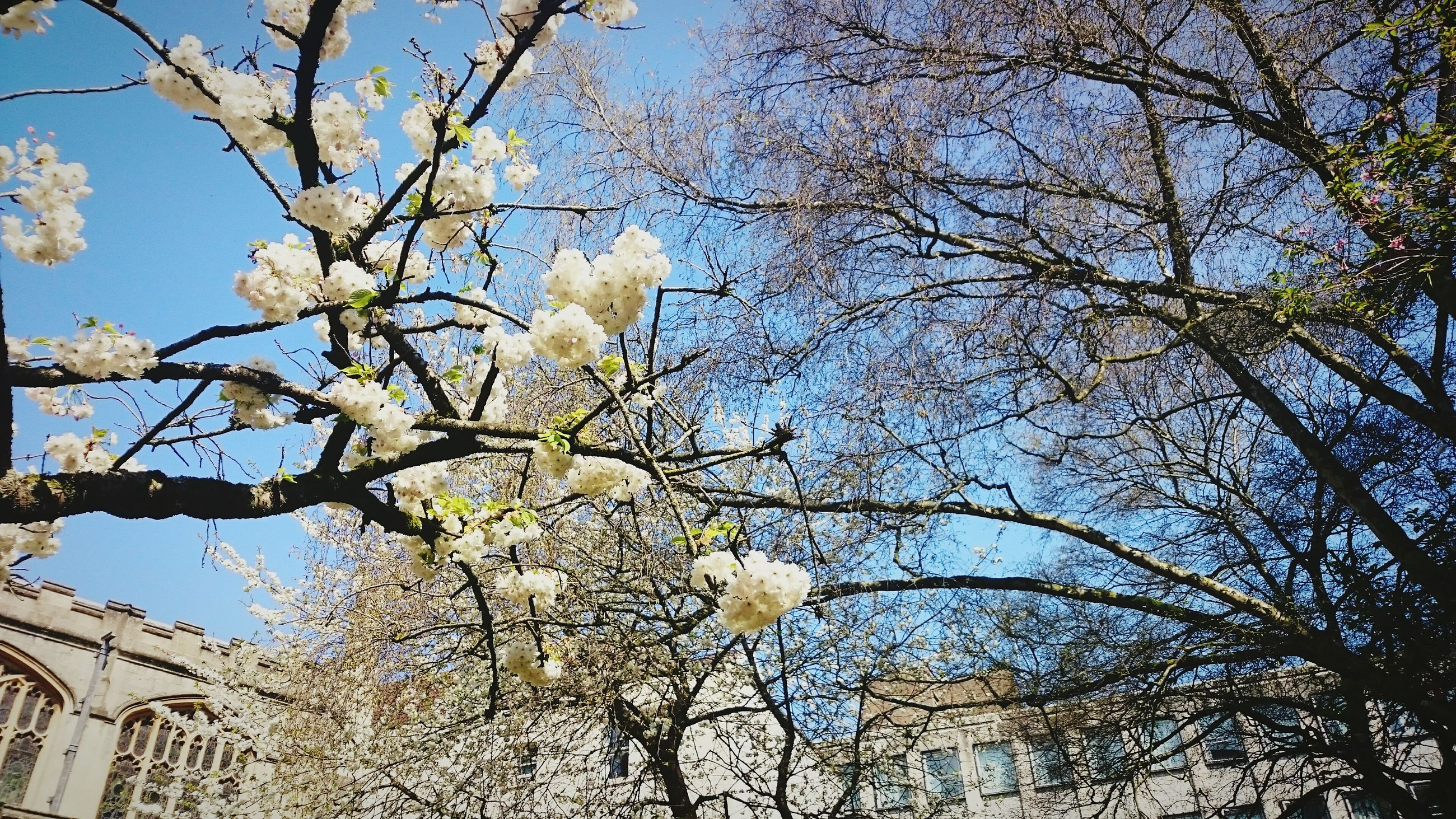 low angle view, tree, sky, growth, branch, nature, no people, beauty in nature, springtime, outdoors, day, flower, animal themes, close-up