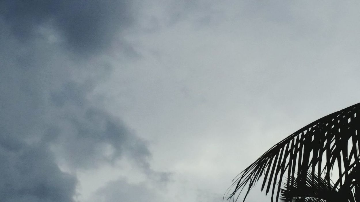 SKY CLOUDS OUTSIDE NATURE Tree Coconut Tree Leaves Before Rain
