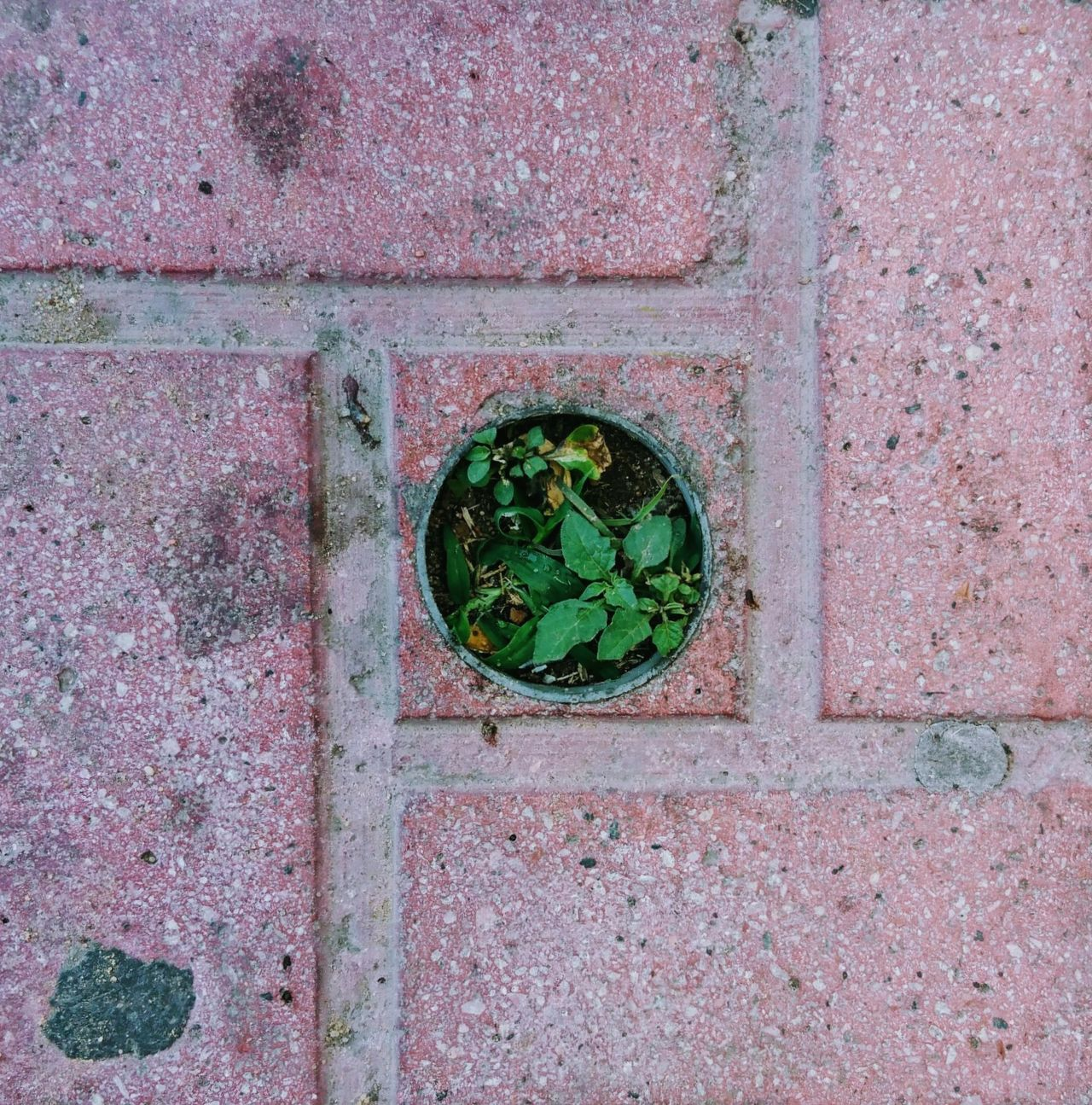 Green circle 🌱 Day Green Color No People Outdoors Close-up Green Plants Plants 🌱 Streetphotography Street Street Plants Self Grown Multi Colored Pink Grass Travel Traveling High Angle View Up Above EyeEm EyeEm Best Shots EyeEm Nature Lover EyeEm New Here