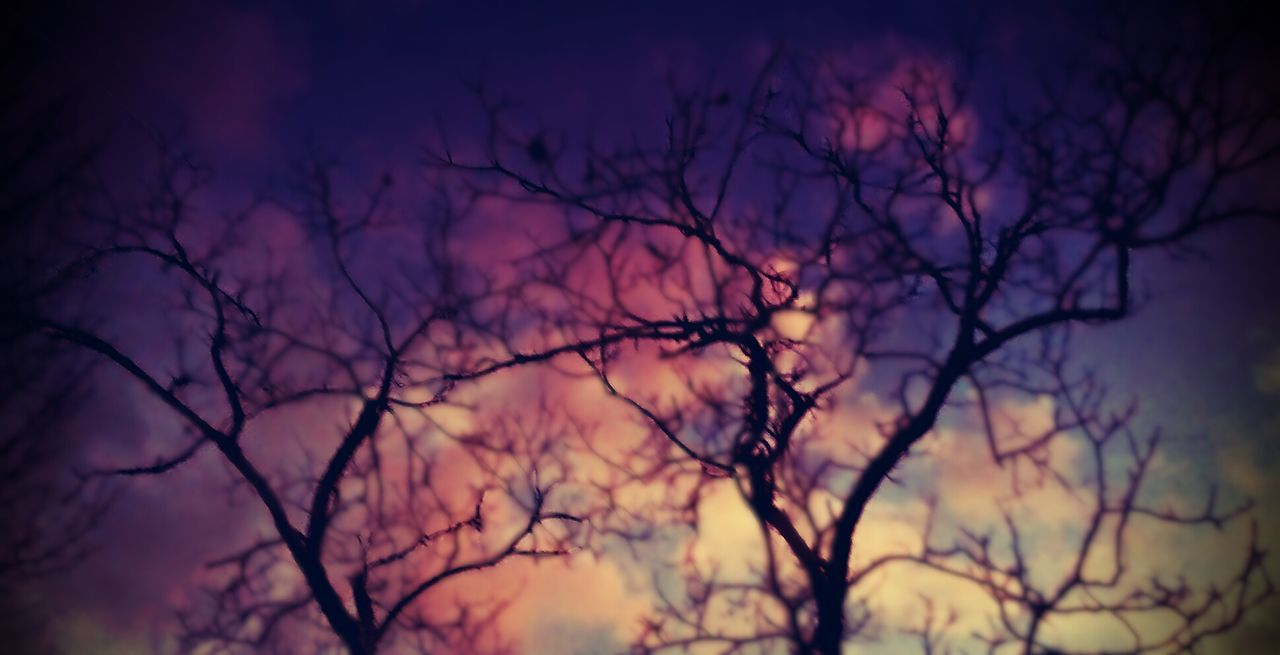 Bare Tree Tree Nature Dusk Silhouette Branch Beauty In Nature No People Sky Sunset Cloud - Sky Outdoors Relaxation Og Picturesque Southern Day Scenics WoodLand Tranquility Mobile AL Landscape