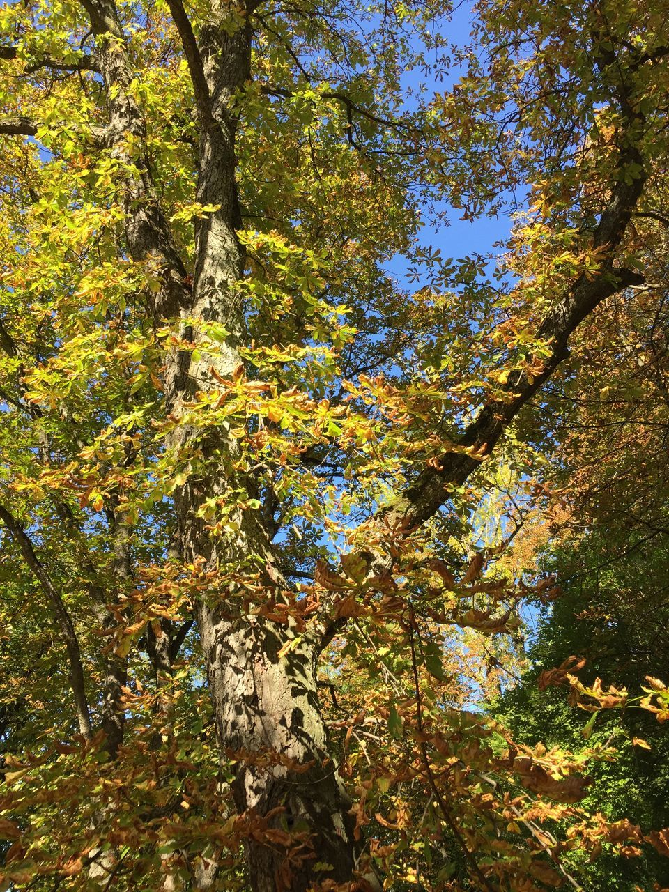 tree, growth, nature, branch, beauty in nature, day, no people, outdoors, leaf, autumn, tranquility, low angle view, tree trunk, forest, scenics, flower, freshness, fragility, close-up