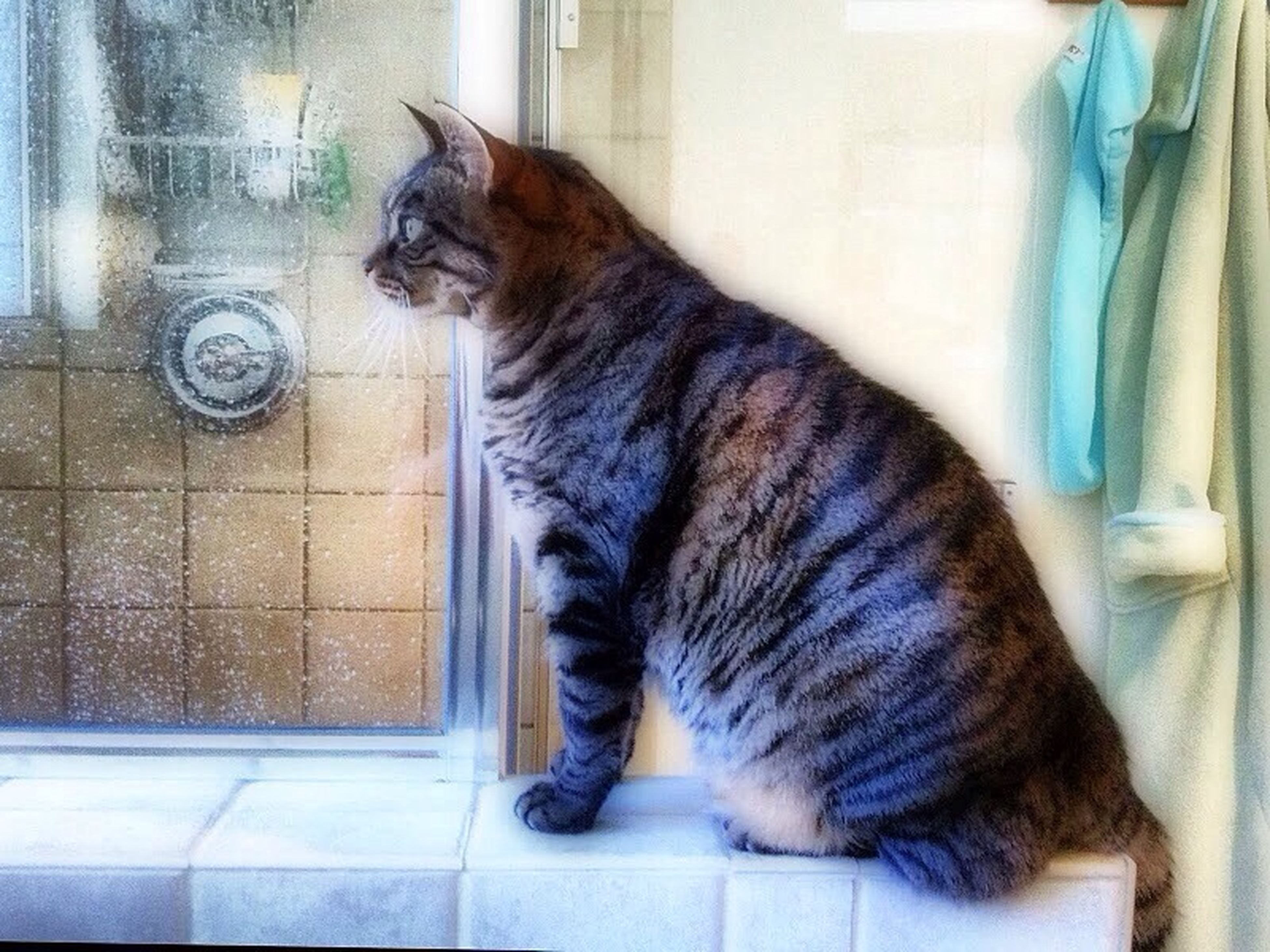 pets, domestic animals, one animal, animal themes, mammal, domestic cat, indoors, cat, feline, relaxation, full length, home interior, door, sleeping, window, home, resting, no people, side view, sitting