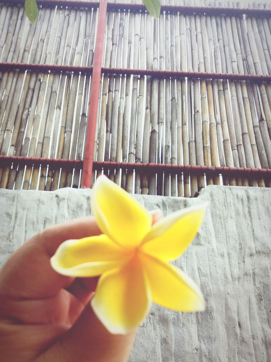 Nature Indoors  Holding Human Hand Close-up Yellow Flower Backgrounds Bamboodesign Wall Human Body Part One Person Day People Adults Only One Man Only Adult First Eyeem Photo EyeEmNewHere