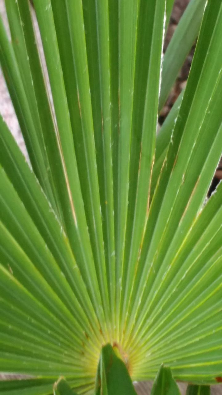 green color, leaf, growth, close-up, nature, day, no people, backgrounds, full frame, frond, outdoors, freshness
