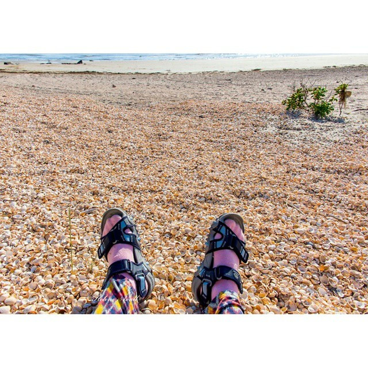 Beach Shells ShellBeach Timberland Timberlandboots Summertime Sunnydays SummerinSweden Sunshineaddicted Photooftheday Vacaciones Vacations Vacationtime Vacation2015 Semester Sommar Snäckor From My Point Of View Showcase: February Our Best Pics igdaily#igfame#swag#illest#supreme#stussy#snapback#chicago#bulls#dope#obey#thehundreds#tflers#followforfollowlikeforliketagfortagfollowmefollowmeasap [a:here Belongs To Me Landscape