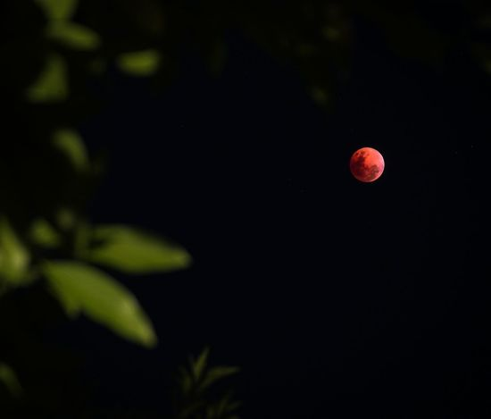 Super blue blood moon Manila Manila, Philippines Eclipse Lunar Eclipse Blue Moon Blood Moon Super Blue Blood Moon Moon Moonlight Night Nightphotography EyeemPhilippines Eyeemph EyeEmPhilppines Moon Red Night No People Astronomy Outdoors Nature Close-up