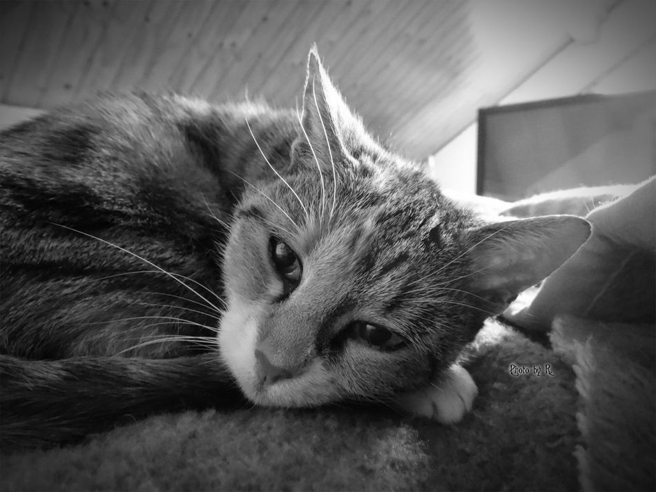 What are you doing? Domestic Cat Pets Domestic Animals Mammal Close-up Taking Photos Photography EyeEm Best Shots Eyeem Best Shot Blackandwhite