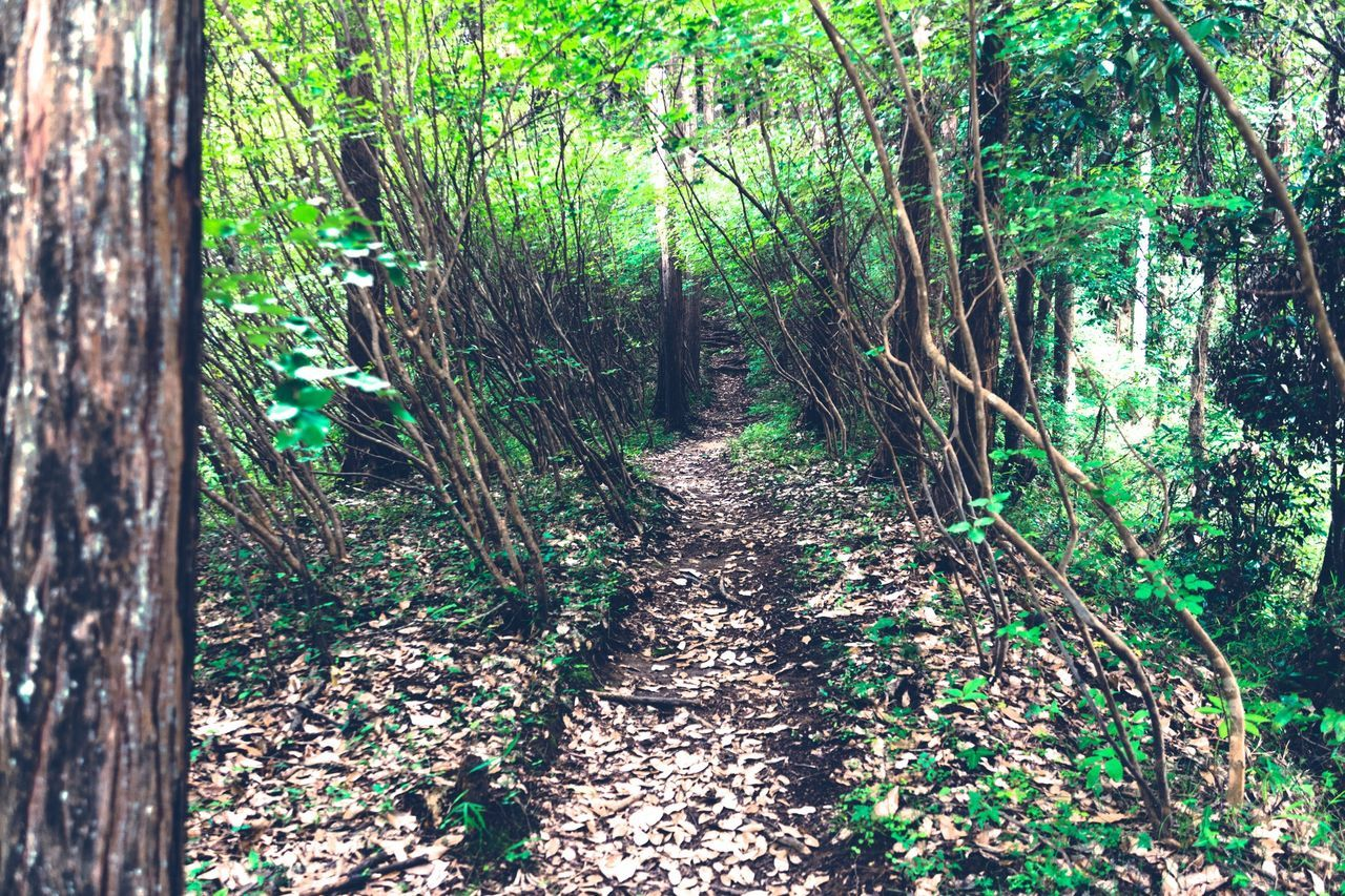 Nature On Your Doorstep Quality Time Hugging A Tree Human Vs Nature The Adventure Handbook Share Your Adventure EyeEm Best Edits Greenery Protecting Where We Play Walk This Way