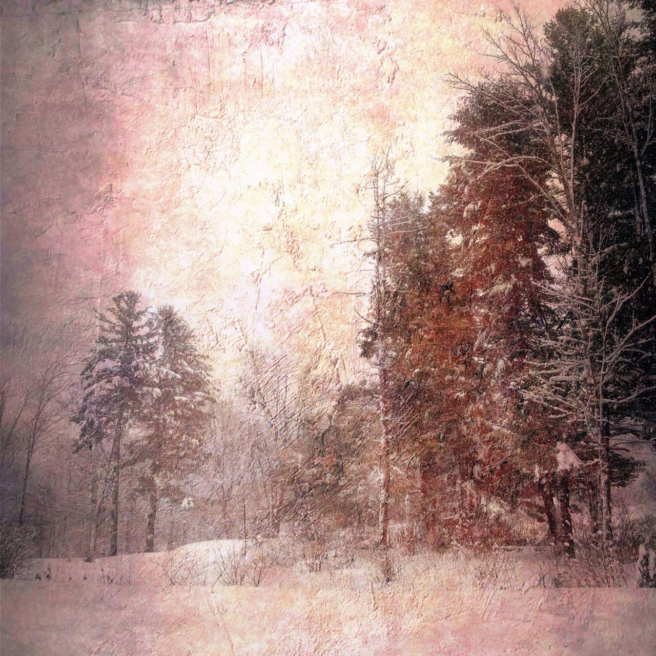 winter, snow, cold temperature, tree, no people, nature, backgrounds, outdoors, day