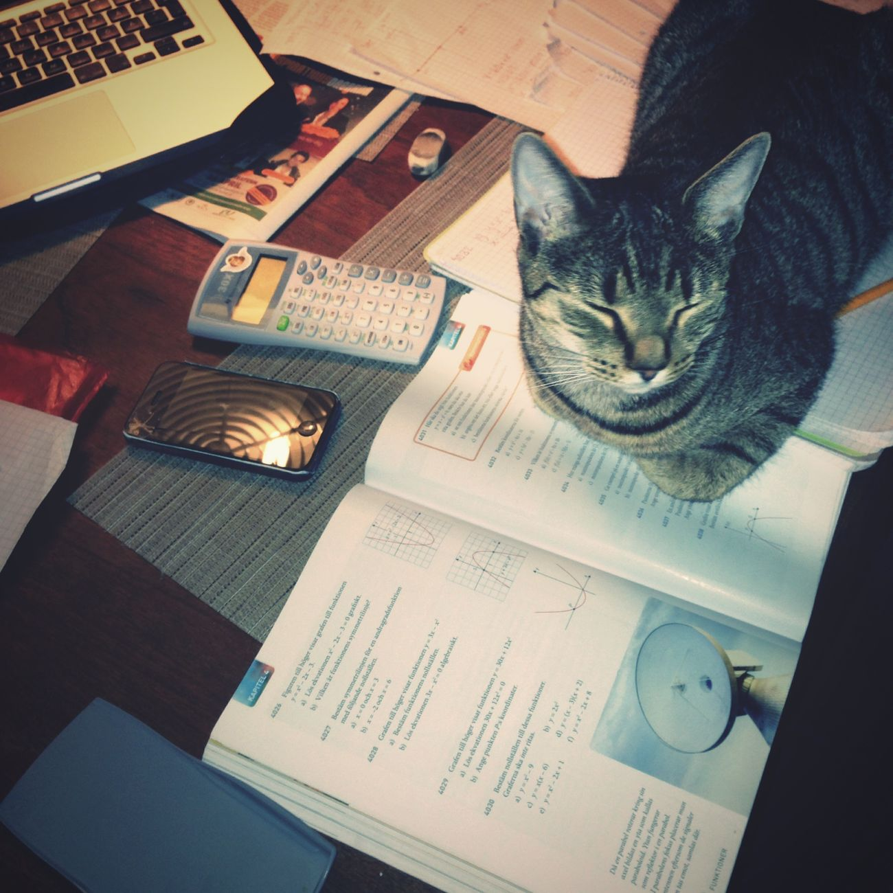 Study buddy Cat Sickan Homework