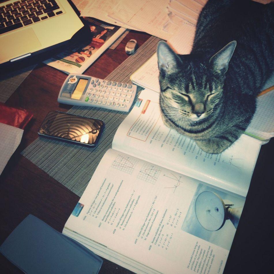 Study buddy Cat Sickan Homework