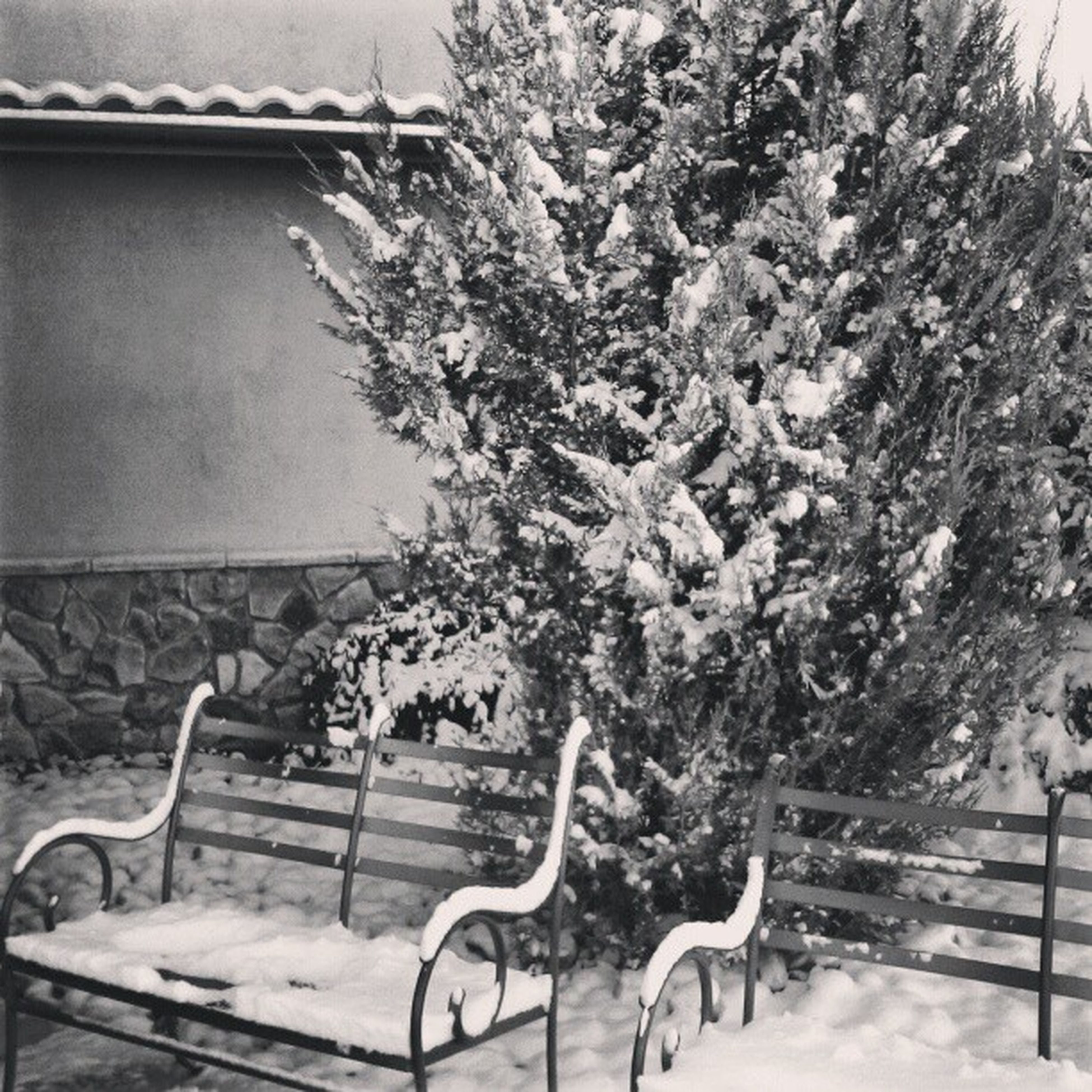 snow, winter, cold temperature, tree, season, nature, growth, covering, weather, white color, built structure, branch, beauty in nature, fence, tranquility, house, plant, building exterior, outdoors, bench