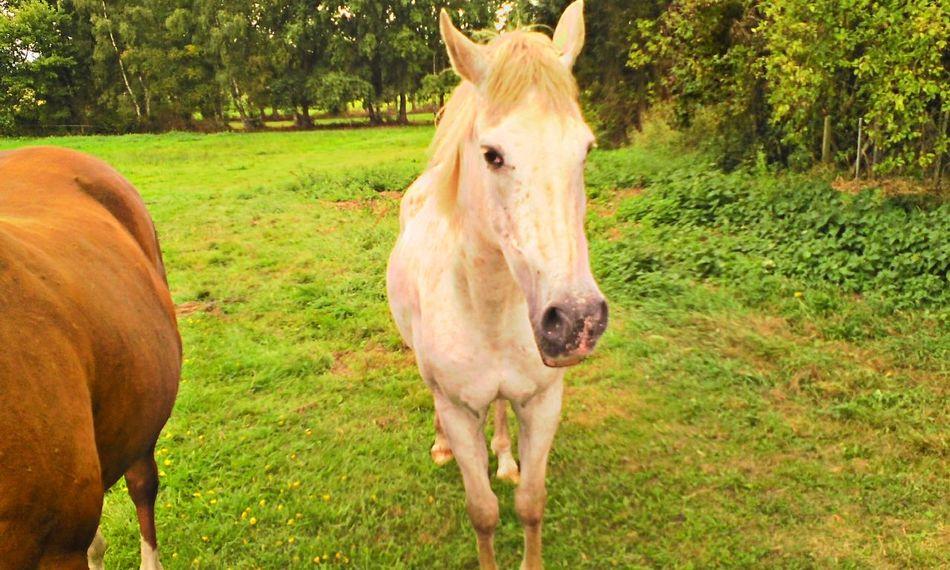 #HTers #HashTags #babyhorse #beautiful #farm #gallop #grass #horse #horses #horseshoe #horseshow #horse #horsestag #igers #ilovemyhorse #mane #nature #photooftheday #picoftheday #ponies #pony pretty rider riders