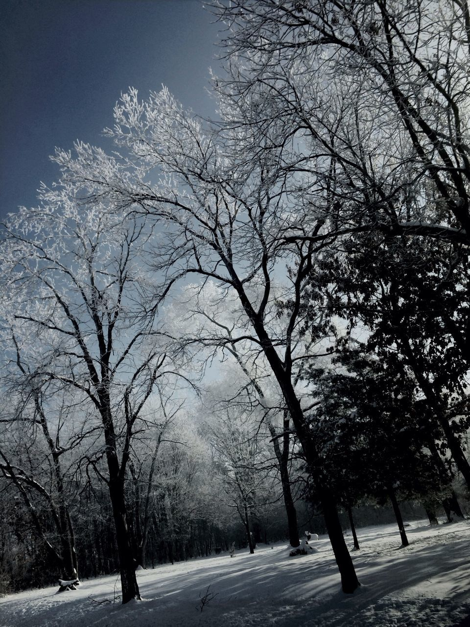 tree, bare tree, road, nature, no people, winter, outdoors, tranquility, snow, branch, day, scenics, cold temperature, clear sky, beauty in nature, sky, city