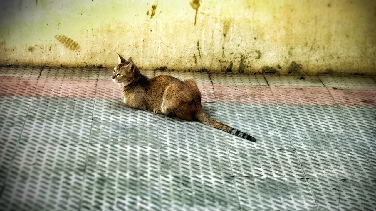 animal themes, one animal, domestic cat, mammal, domestic animals, pets, feline, no people, day, relaxation, sitting, outdoors, nature