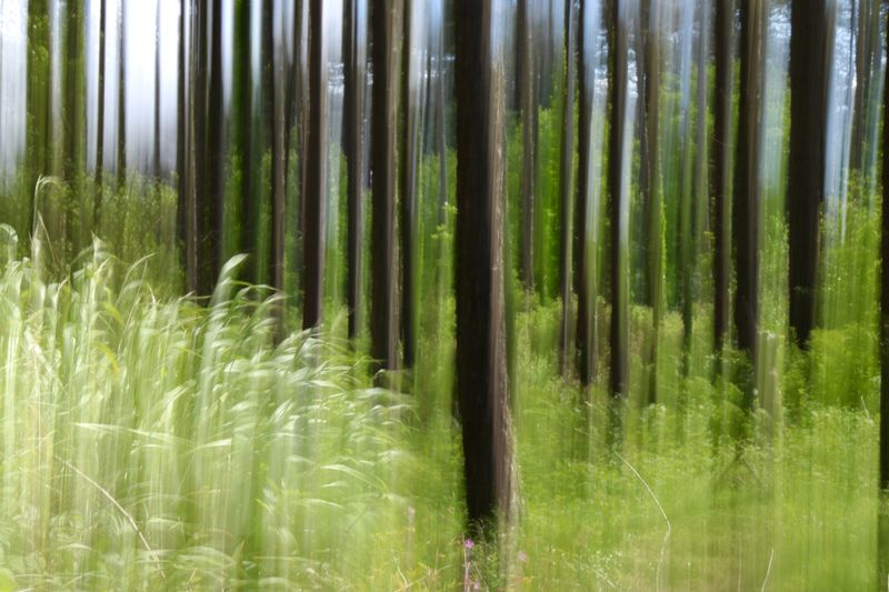 Forest EyeEm Nature Lover Wales Pattern, Texture, Shape And Form Lines Linear Long Exposure Intentional Camera Movement Shutterdrag Forest WoodLand Growth Nature Outdoors No People Day Field Green Color Beauty In Nature Tranquility Grass Plant Scenics Landscape Rural Scene Tree Close-up