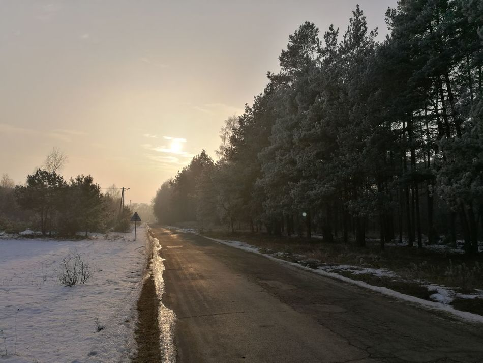Tree Road The Way Forward Sunset Water Nature Landscape Outdoors No People Day Close-up Plant Snow Cold Temperature Winter Forest