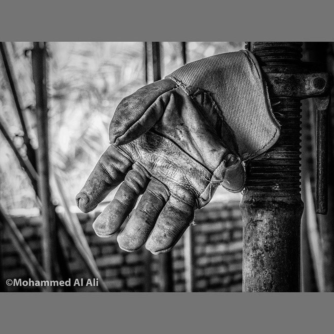 Olympus OlympusPEN PL7 Glove Micro_four_third Mft Bird Basrah Iraq Blackandwhite Monochrome