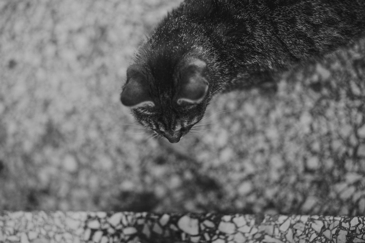 Lazy Sunday in Mielec, Poland. Animal Animal Themes Cat Cats Cats Of EyeEm Close-up Pet Pets