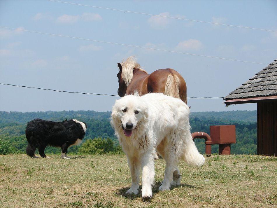 Arkansas_ozarks Harriet Arkansas Horses Beautiful ♥ Horsing Around Horse Dog Doglife Ranchdog Cattle Dog Beauty