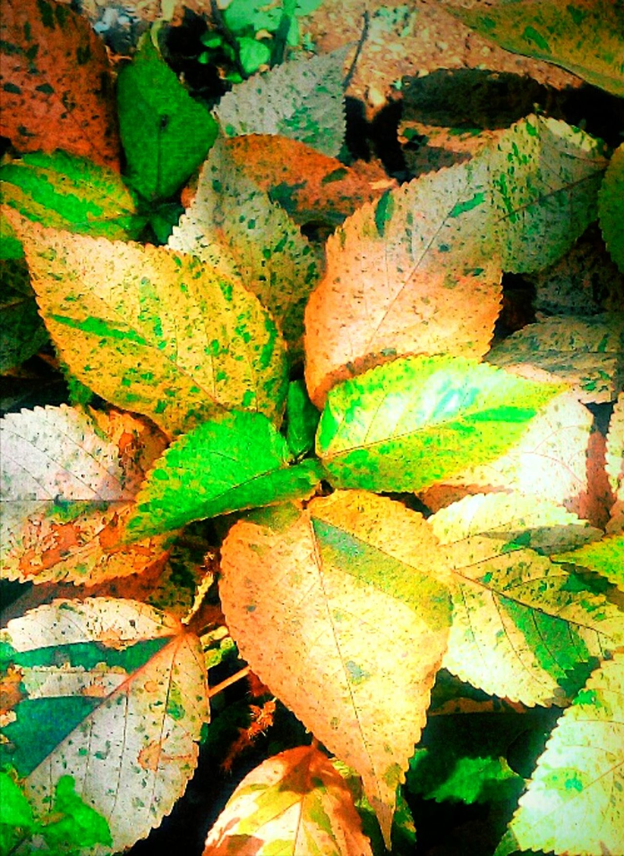 Colors Leaves Taking Photos Nature Beautyful Colours