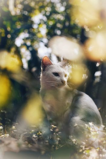 White Cat White Cat Outdoor Kitten My Pet Cat Kitty Shadow Portrait White Cat White Cat Sitting One Animal Animal Wildlife Animal Animals In The Wild Nature Wilderness Day Animal Themes Outdoors No People Underwater UnderSea Close-up Mammal