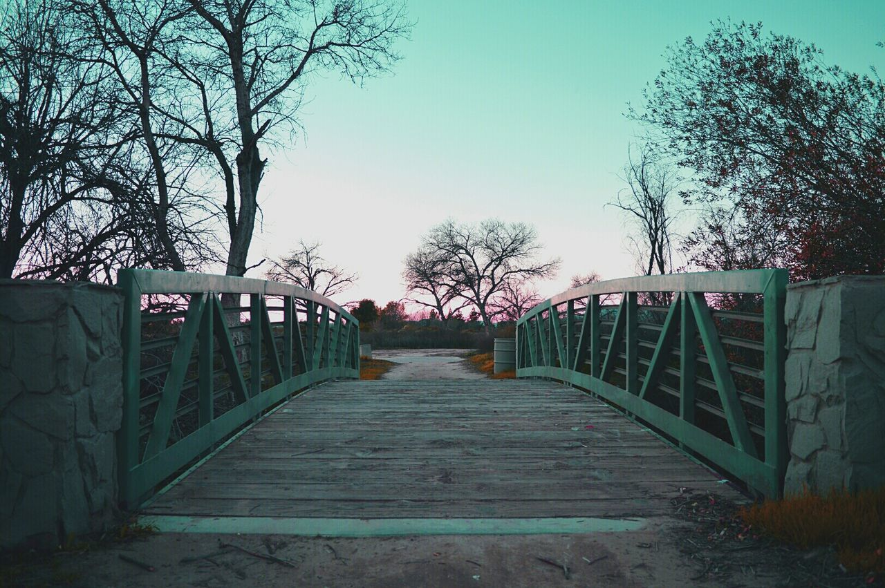 railing, tree, the way forward, bare tree, no people, footbridge, outdoors, day, nature, sky