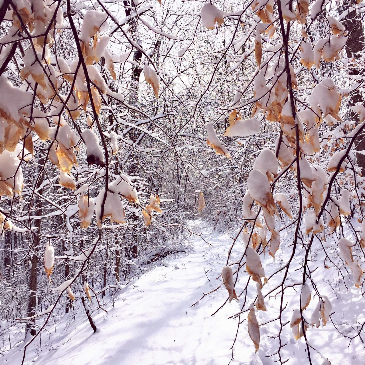 Snow Ice Winter Cold Temperature Beauty In Nature Nature Weather Tree No People Outdoors Branch Day Forest Forest Path Traveling Home For The Holidays EyeEm Best Shots Walk This Way Magic Moments Landscape Scenics Tranquility Tranquil Scene